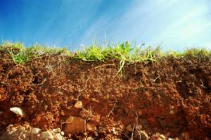 Gardening in Rocky Soil