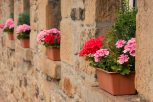 Planting in Window Boxes